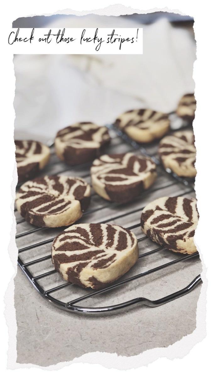 bobux sessions vanilla choc cookies